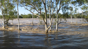 Widespread rainfall continues to fall in northern NSW
