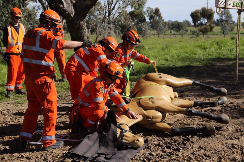 NSW SES Large Animal Rescue training in Grafton