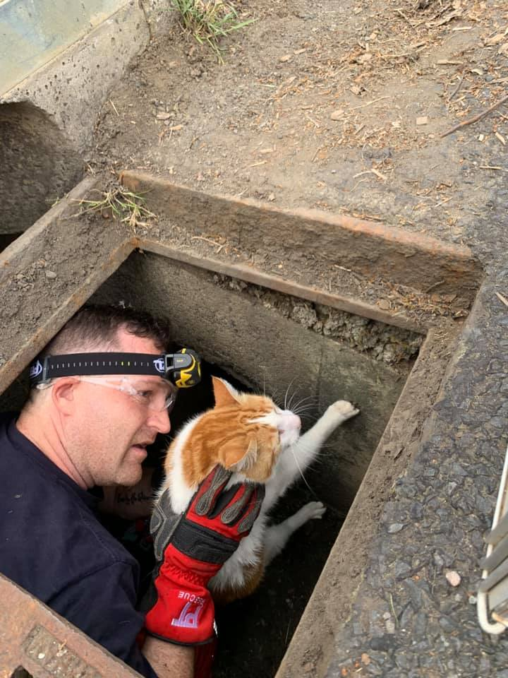 NSW SES rescues cat from drain in Bowral