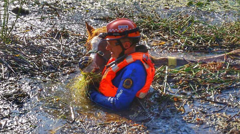 NSW SES rescue old horse from dam