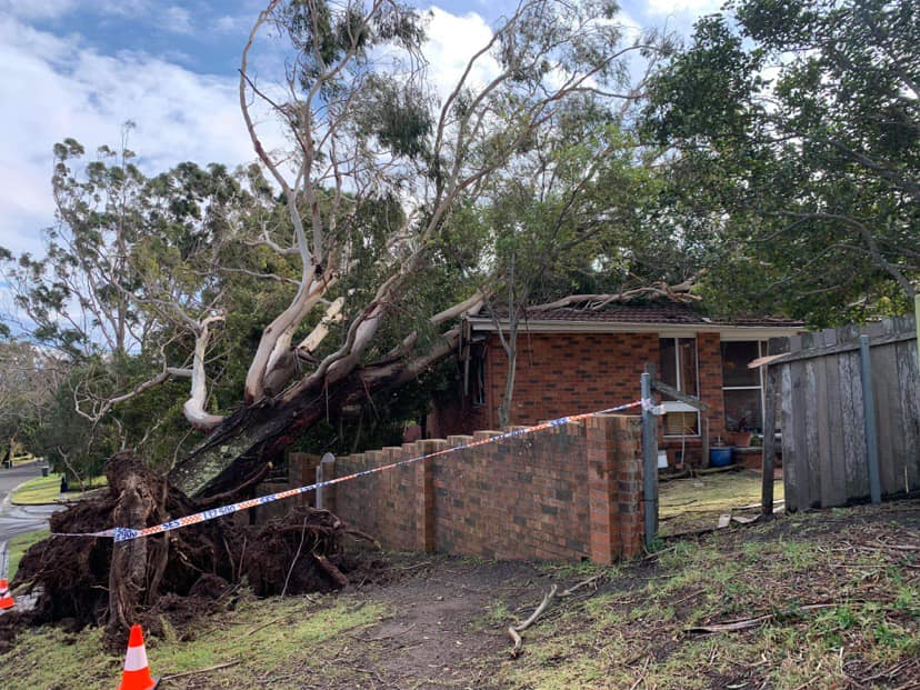 Gale force winds cause havoc across NSW